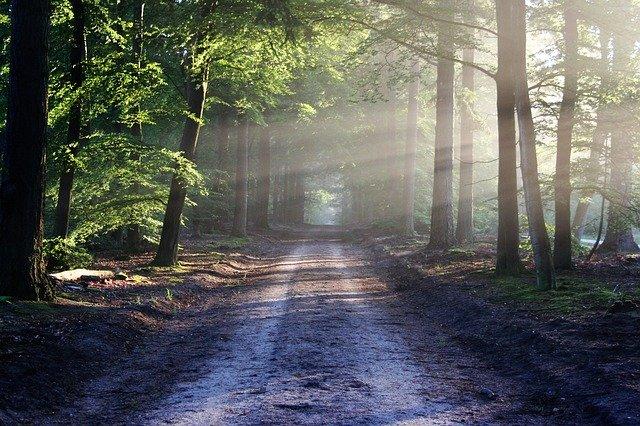 cesta cez les.jpg